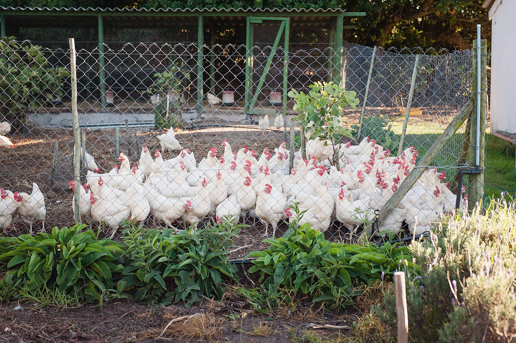 The chicken coup at Grootbos (Angelique Smith Photography)
