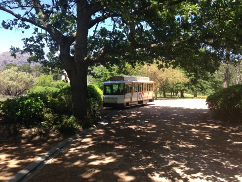 The tram waiting for us under one of the huge trees at Anthonij Rupert Wines.