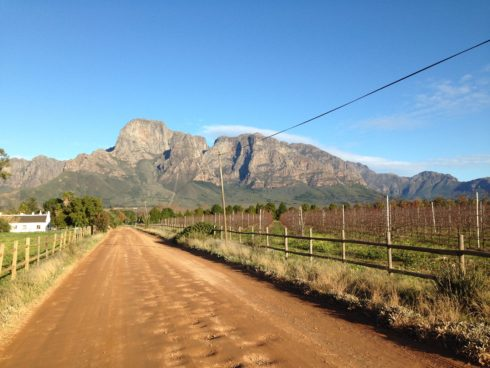 One of the roads on the working farm side of Boschendal Farm. Magnificent scenery.